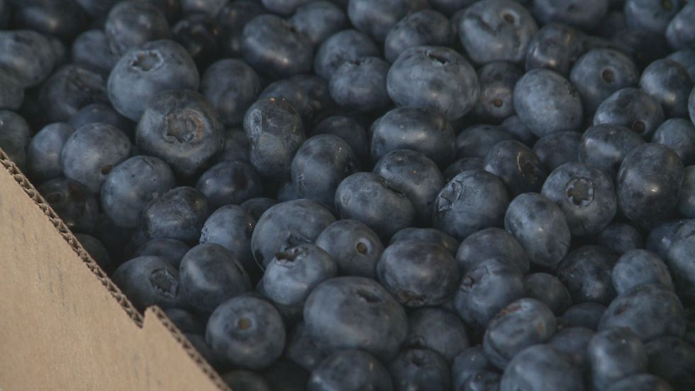 The Blueberry Patch in Sawyer is back open for the season.