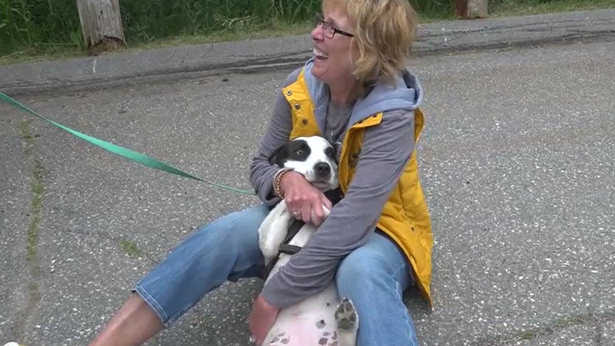The Kennebec Valley Humane Society hosted the Road Trip Home 2021 reunion from 4 to 7 on Friday.