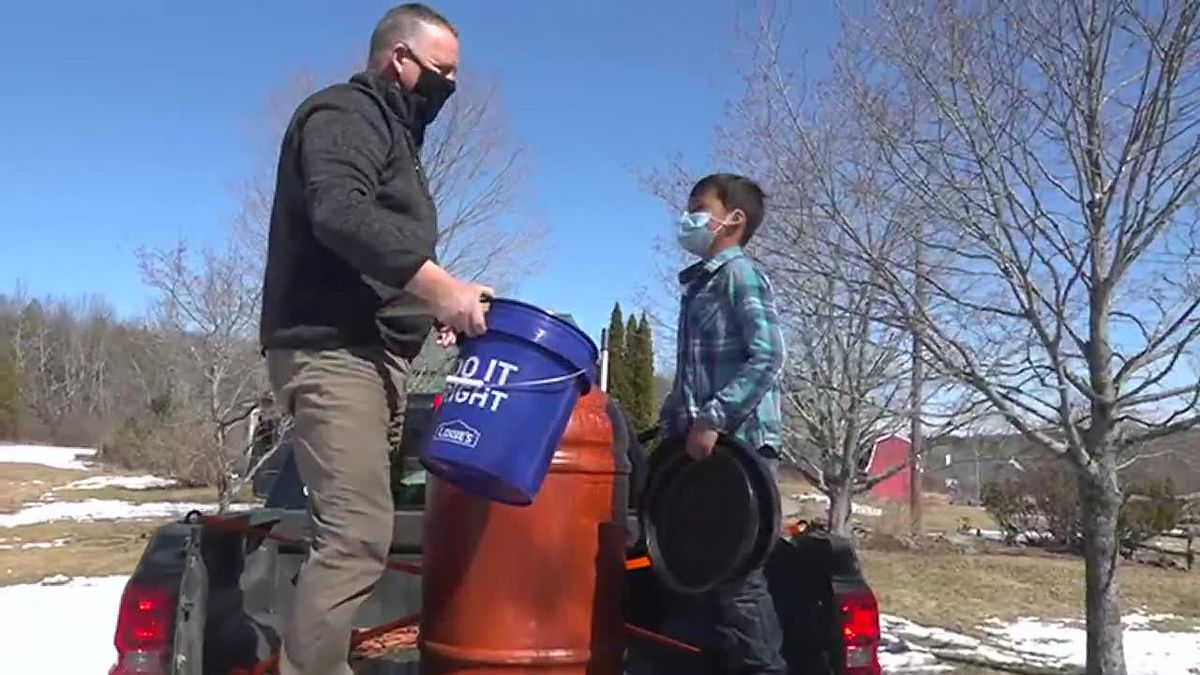 Maple syrup tapping at home