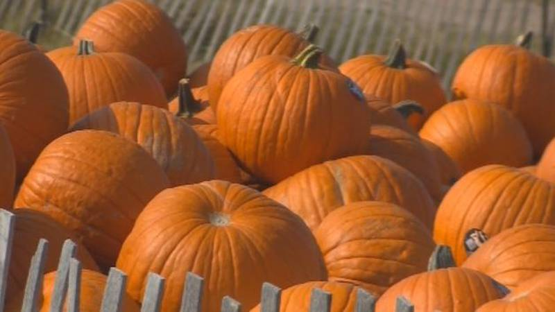 Local experts say there are steps you can take to make sure you pumpkin sticks around for...