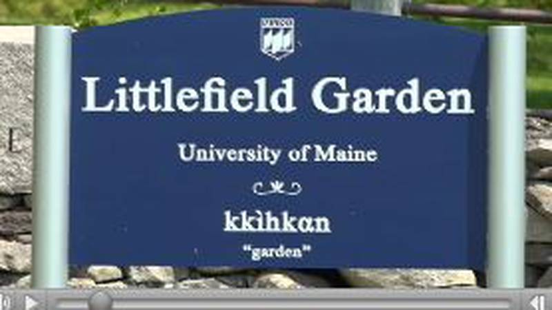 Nearly 2,500 plantings can be found at the Littlefield Garden on the University of Maine campus...