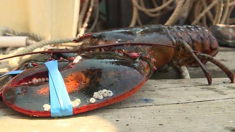Maine lobstermen and women may qualify for up to $50-million in trade war relief.