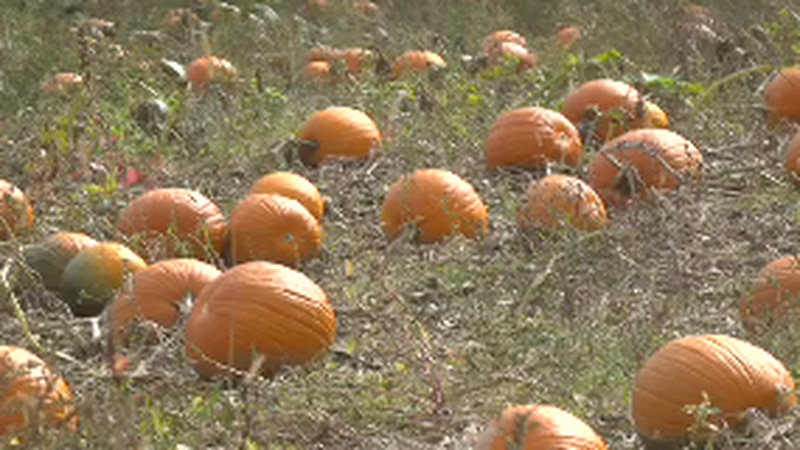 A farm in Corinna is looking to be a one stop shop for fall family fun, all while supporting a...