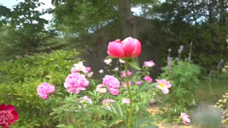 Bangor couple invites public to visit their flower garden.