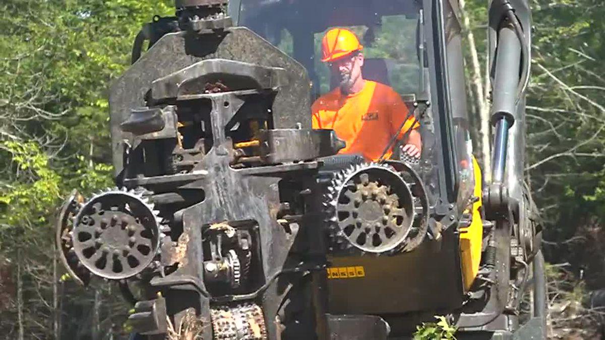Logging Contractors facing downfall