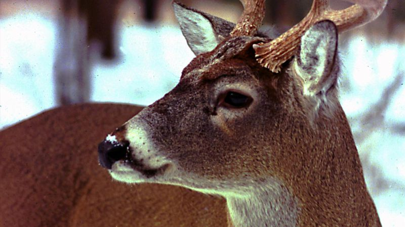 Brownville's Food Pantry for Deer in need of donations.
