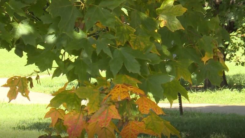 Fall foliage season arrives.