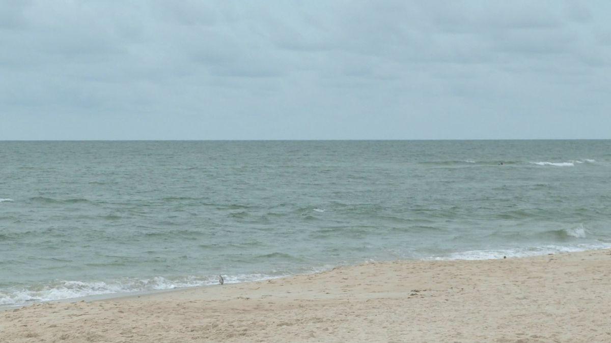 The Maine Marine Patrol has urged anyone who spots a shark to contact them immediately.