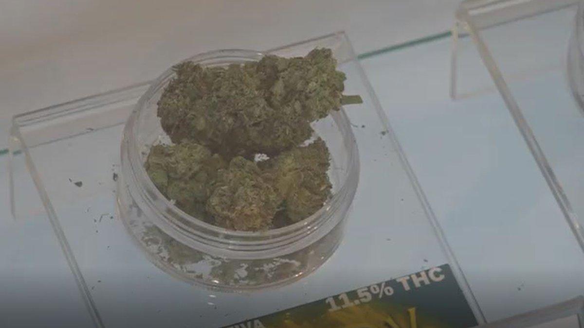 Bid day in marijuana industry