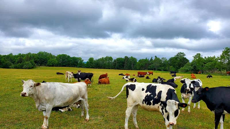 A restriction in the USDA's Conservation Reserve Program has been lifted due to this summer's...
