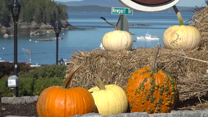 Fall in Bar Harbor has been as busy as it has been beautiful this year.