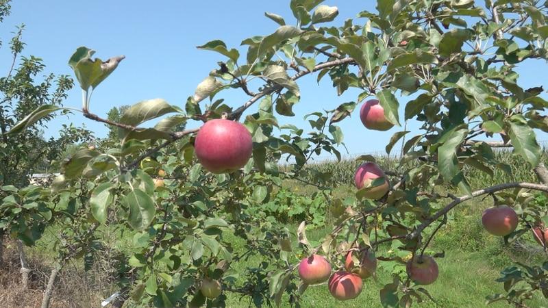 Hooper's Orchard in Monroe