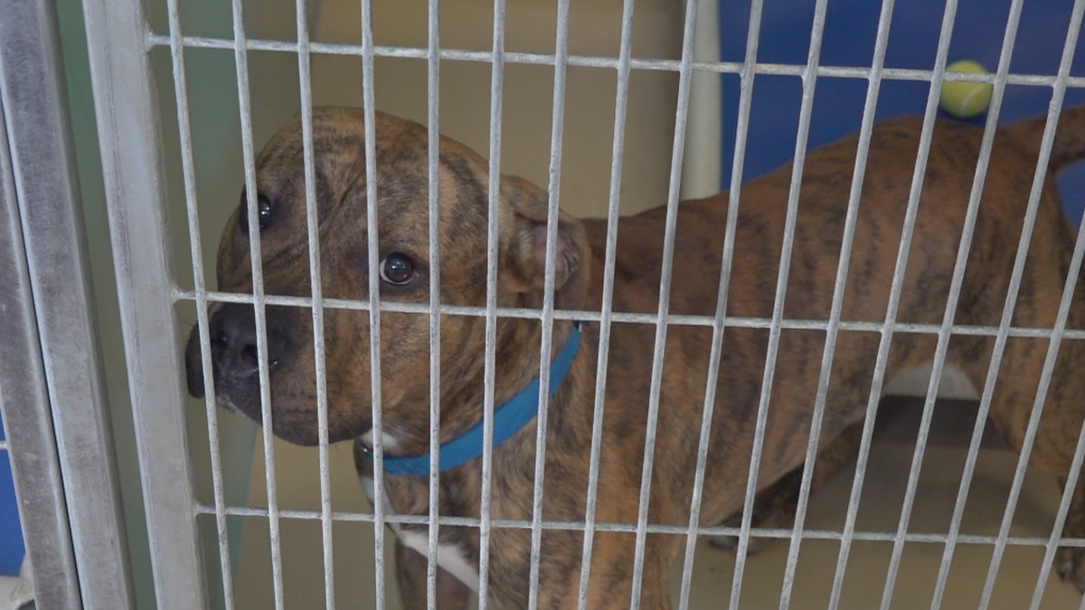 Waterville Area Humane Society