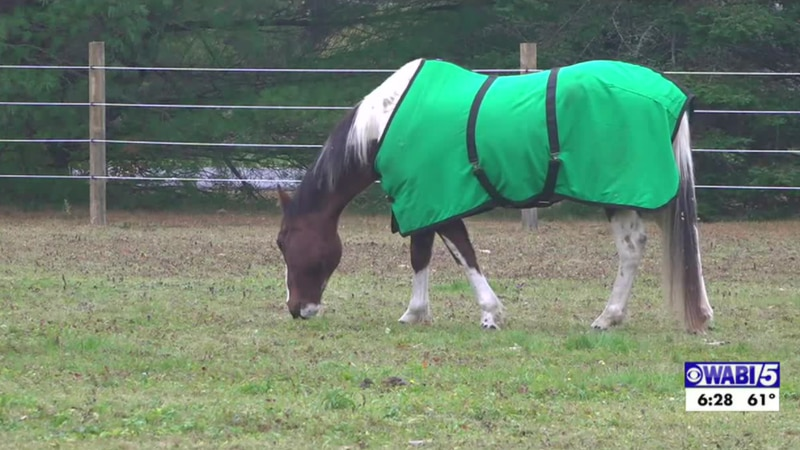 A therapeutic horse ranch in Orrington is looking for support from the community as they keep...