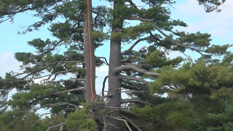 Lightning strike kills eight cows in Winslow